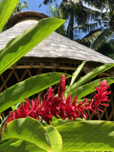 Image of hut and flowers